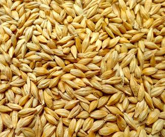 Barley shelling machine / Barley sheller /Barley huller